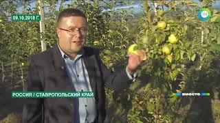 Яблони для президента: О чем попросили Путина садоводы Ставрополья