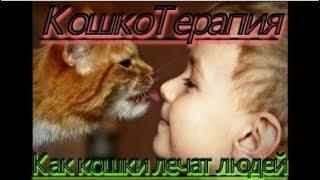 КОШКОТЕРАПИЯ: как кошки лечат людей!