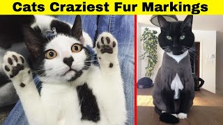 Cats With The Craziest Fur Markings You'd Almost Think Were Photoshopped