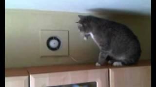 Кошка против вентилятора