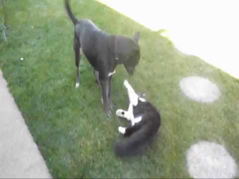 Barbu: dog vs. cat #2