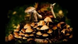Joe Rogan explains the psychedelic experience