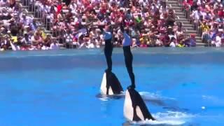 Seaworld SHAMU Killer Whale Show fune video