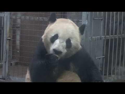 Shuang Hao 04142018 @ Hangzhou Zoo