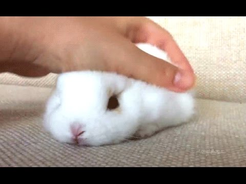 Rabbit A Funny And Cute Bunny Videos Compilation New Hd Youtube