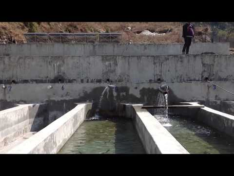 Trout Farm In Manang || Nepal || Trout Fish Farming