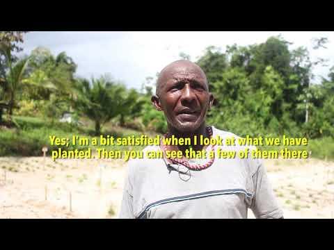 Soil remediation in Suriname using organic matter