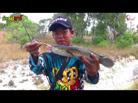กบซุปตาร์ # ตกปลาช่อน ตอนแดด ร้อนๆ ก็จัดได้ ใบหลิวซุปตาร์ BY Yod911