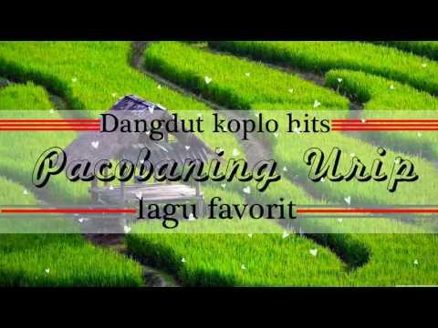 Pacobaning Urip koplo Hits