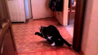 Кот занимается сексом