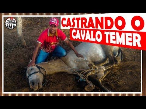 Castrando Cavalo Temer Maldito