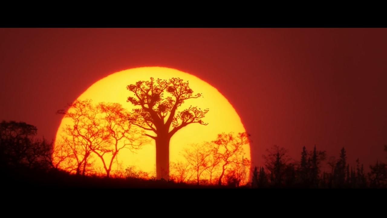 Llega Planeta Selva, una serie documental en 4K que descubre los bosques