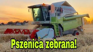 #248- Ostatnie pole z pszenicą!Ujęcia z drona! Czy pszenica sypnie 10ton ?! *Claas Medion 310*