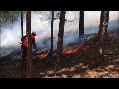 ormanlar yanarken resim ile ilgili görsel sonucu