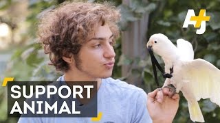 Support Animal – This Cockatoo Has Your Back