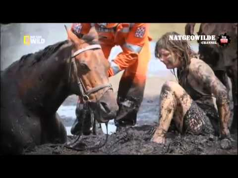 Inspirational Story: desperate girl tries to save the horse