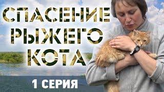 СПАСЕНИЕ РЫЖЕГО КОТА - 1 серия ❆ КОТОЖИЗНЬ! 16 и 18 июня 2019