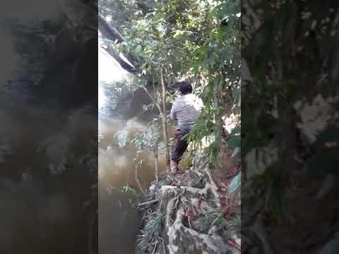 Strike Ikan Gurame 7.8 Kg Sungai Wahau