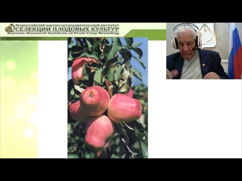 Лучшие сорта яблони Всероссийского НИИ селекции плодовых культур | семеноводство | плодоводство | селекция | внииспк | яблок | фгбну | сорта | седов | н | и