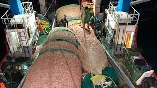 Awesome, Fishermen Catch Hundreds of Tons Shrimp in Newfoundland. The Most Modern  Packaging Process