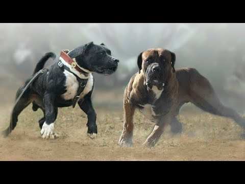 These Are 10 Most Active Dog Breeds