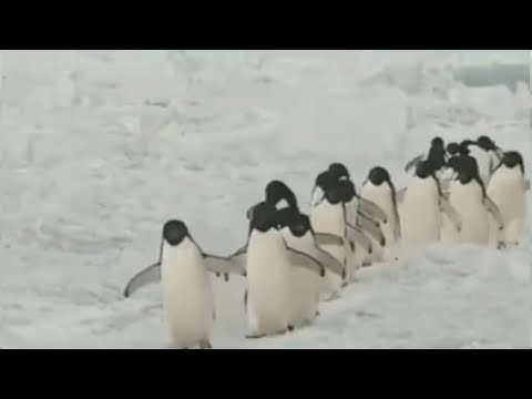 Andy Woods - Take A Break & Watch Some Penguins...it'll make ya happy!