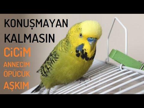 Konuşmayan Muhabbet kuşu Kalmasın #dinletkonuşsun