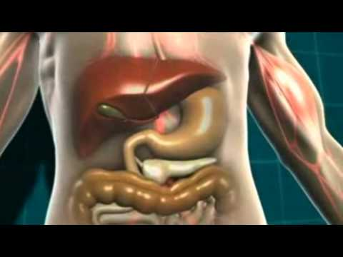 Energy Food Metabolism