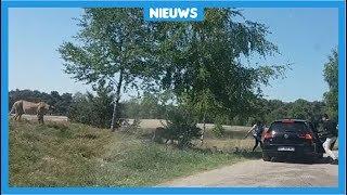 Gezin bijna aangevallen door jachtluipaarden