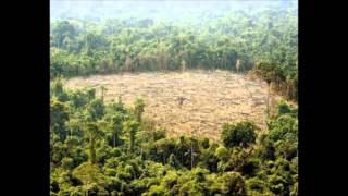 Habitat Fragmentation by Patrick Lindsey