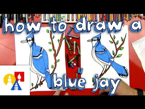 How To Draw A Blue Jay