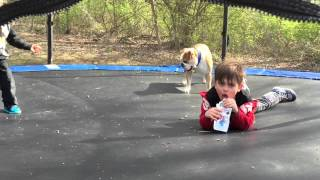 Bulldog Jumping On A Trampoline.