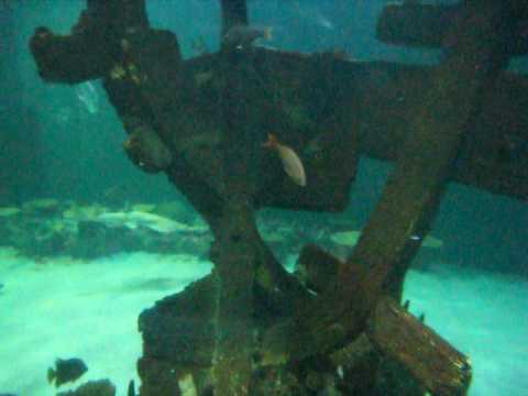 Shark Reef in Madalay Bay.. Watch for Sword fish...