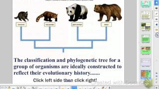 AP Bio Ch 19, P1 - Systematic Biology - classification