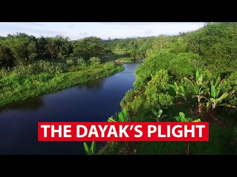 The Dayak's Plight | The Maritime Silk Road | CNA Insider