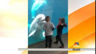 Beluga whale playing with kids