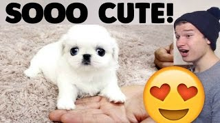 The Cutest Baby Animal Videos Reaction!