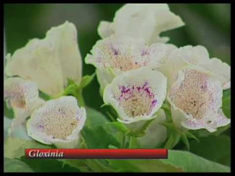 How To Care For Venus Flytrap, Gloxinia and Bromeliad