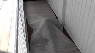 Кот прячется от хозяина