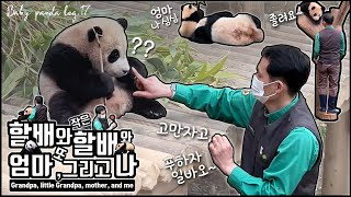 [4K] A day of'Fu-bao', a baby panda loved by everyone Baby panda log Ep.17