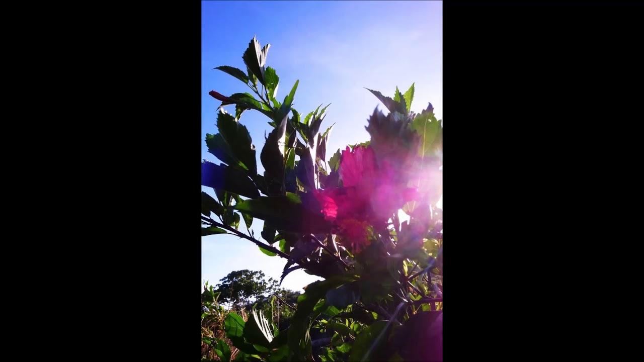 【 人気曲 YouTube音樂庫 】鄉村與民謠。無版權配樂背景音樂下載 /無料の音楽 (BGM) 作業用 歌曲:Achaidh Cheide ...