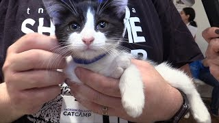 All For Animals TV #62  TNR In NYC: Meet Flatbush Cats & TNR Utopia