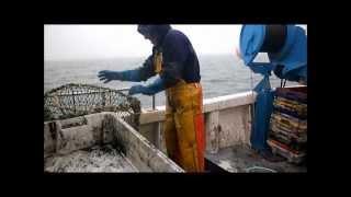 Pêche cotiere a la seiche à bord de l'Arenicole II (Dieppe)