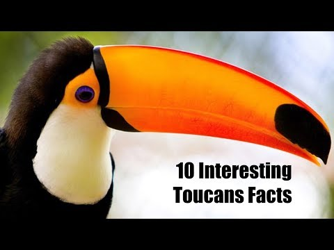 10 Interesting Toucans Facts | Animals Unlimited | Sameer Gudhate