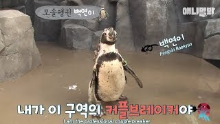 """Penguins even say this """"Singles go to heaven! Couples go to Hell!"""""""