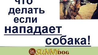 если нападат собаки что делать(, 2017-03-25T22:06:40.000Z)