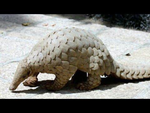 10 Rare Animals Of India