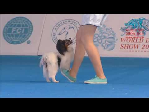 FCI Dog dance World Championship 2016 – Freestyle final  - Irina Efremova and Unkas (Russia)