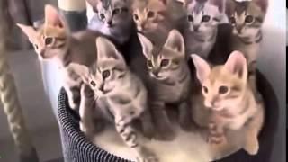 動物おもしろハプニング集!! 私のオススメ http://supports-enhance.c...