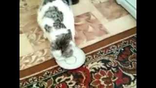 Коту дали валерьянку.wmv